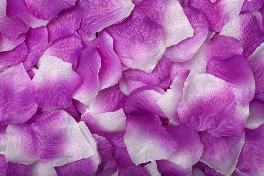 Лепестки фиолетово-белые